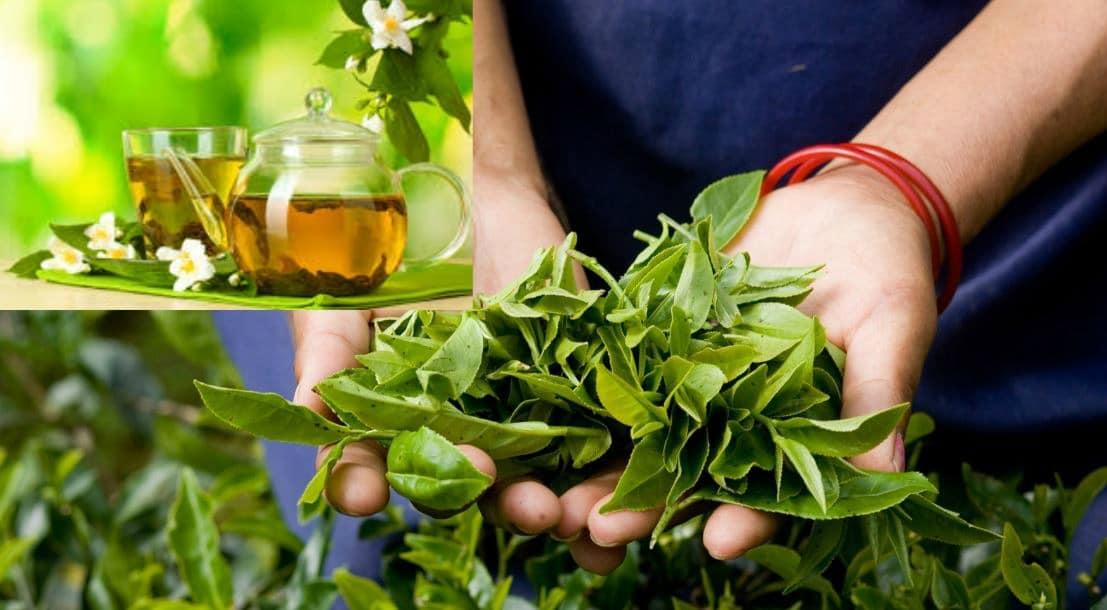 blog-green-tea-benefits