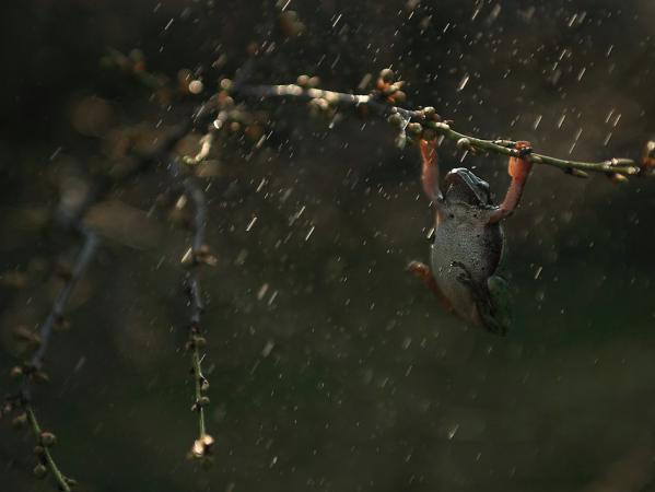 short-story-frog-tree