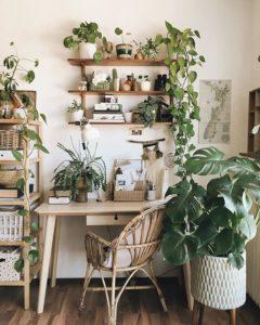 indoor-plants-oxygen