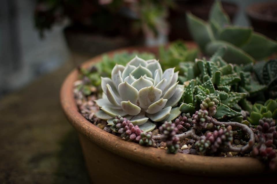 succulent-house-plants