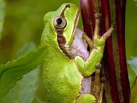 frog-story-motivational