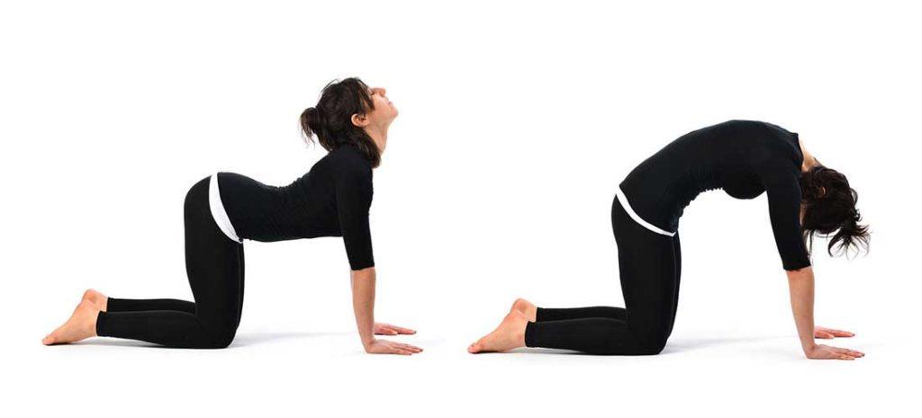 cat-cow-yoga-pose