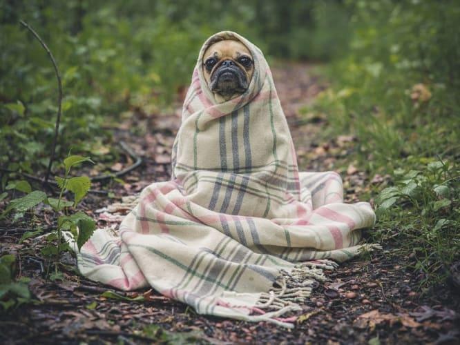 pet-friendly-diwali