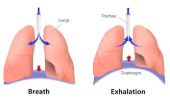 Diaphragmatic-breathing-functions